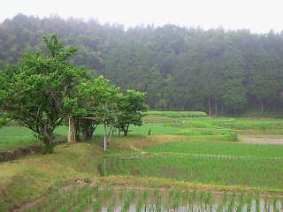 保津川の支流域